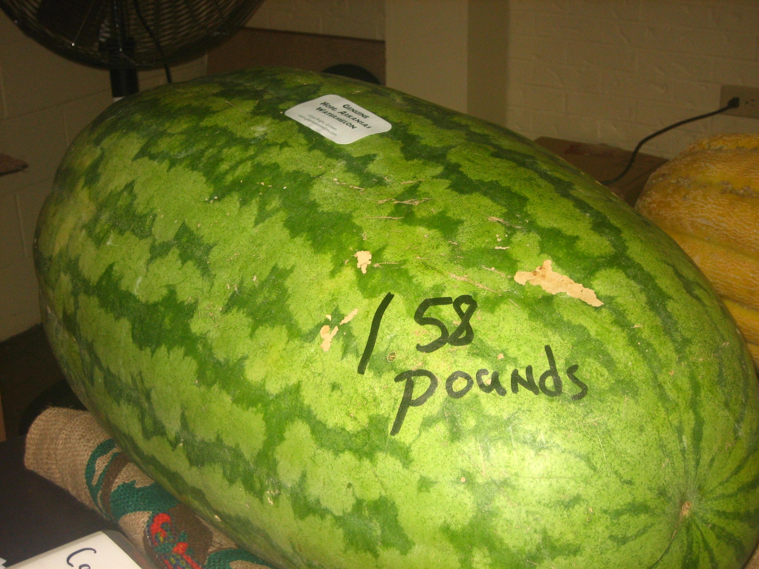 File:Hope, AR watermelon IMG 1516.JPG - Wikimedia Commons