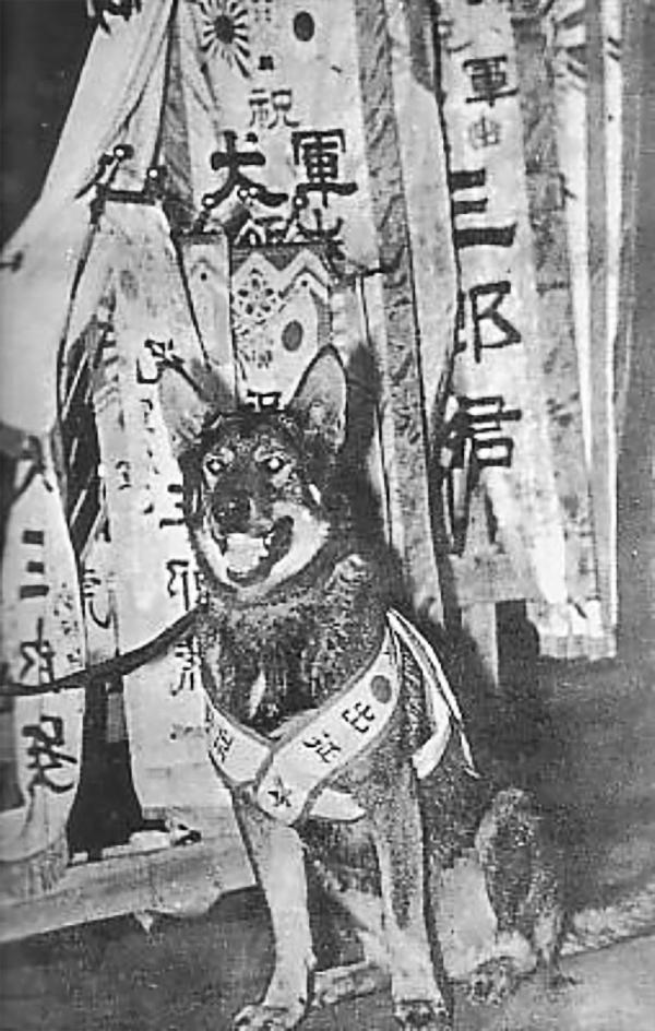 IJA War dog.JPG