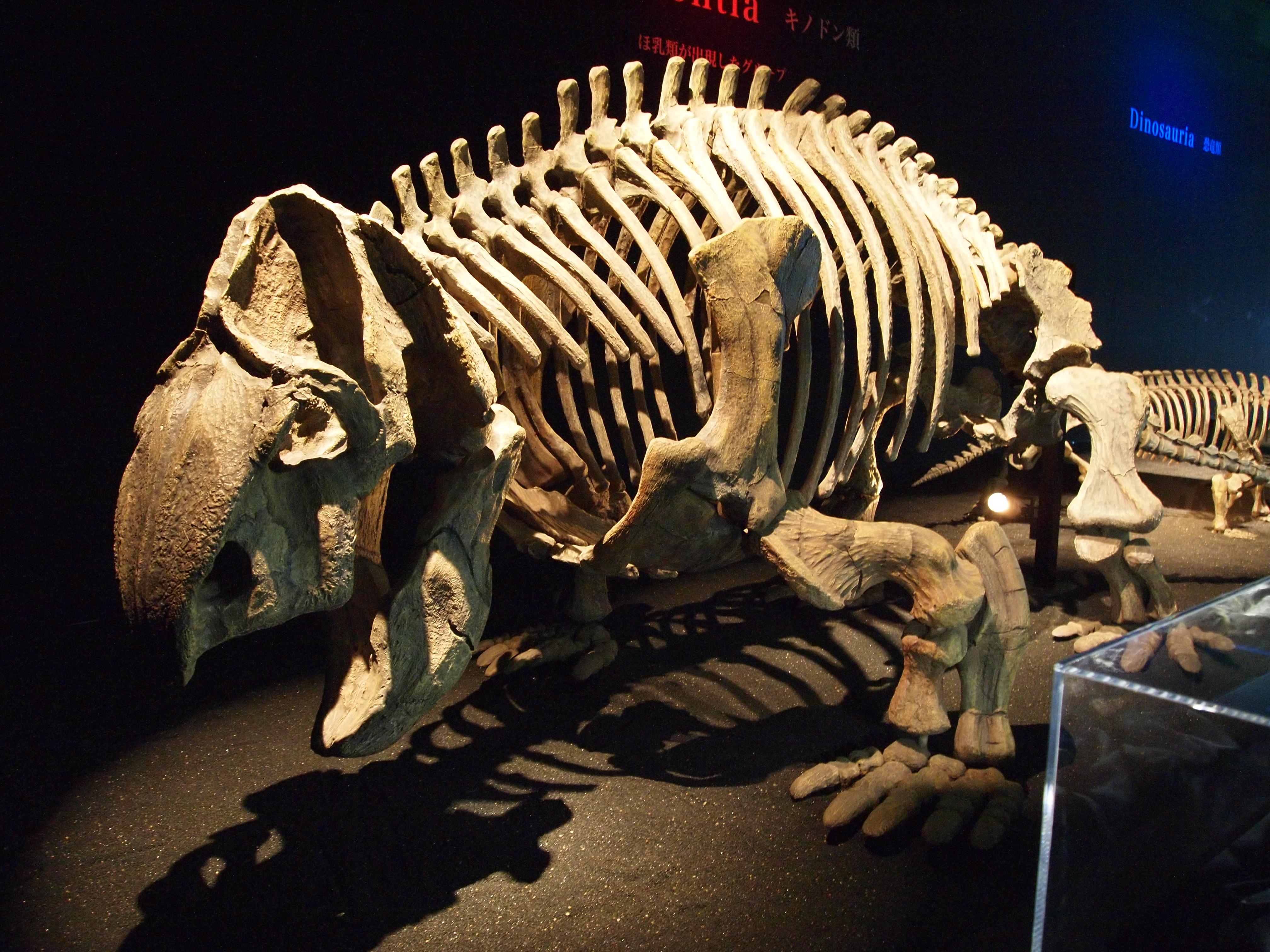 Resultado de imagen de kannemeyeria skeleton