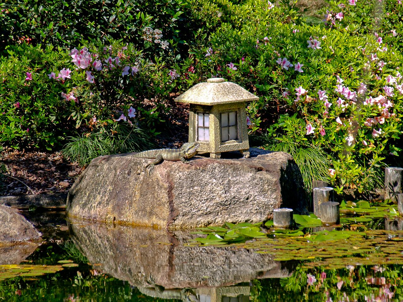 File japanese gardens water dragon 5098734636 jpg for Japanese water garden