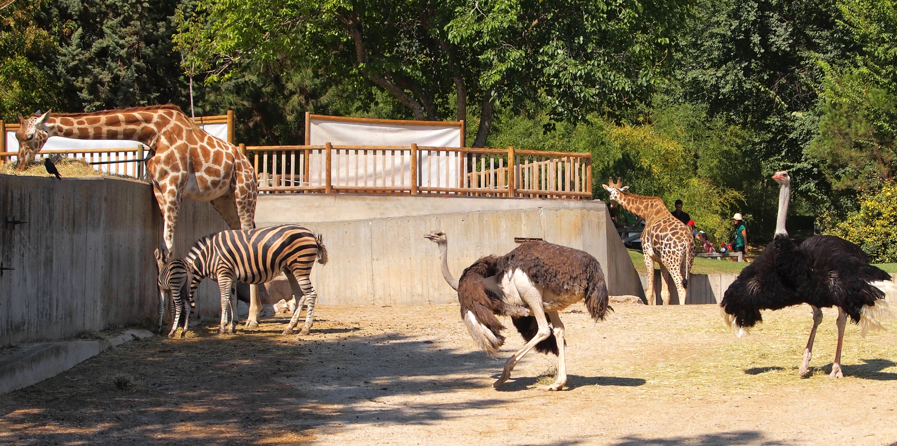 File Madrid Zoo jpg - ...
