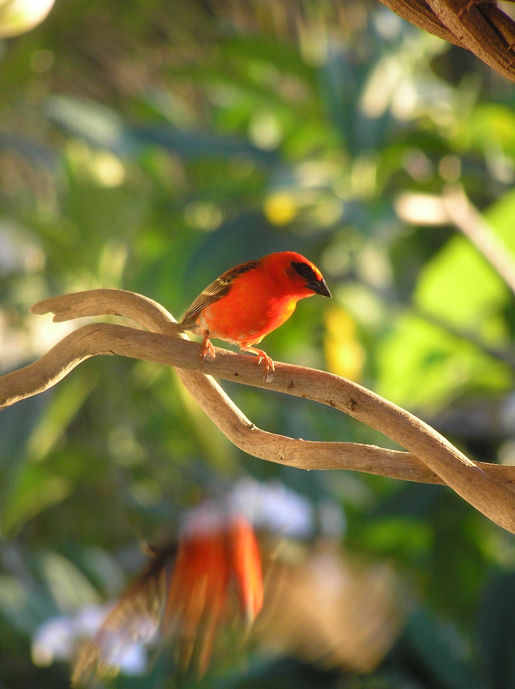 летом платье мадагаскарские птицы фото всего лишь