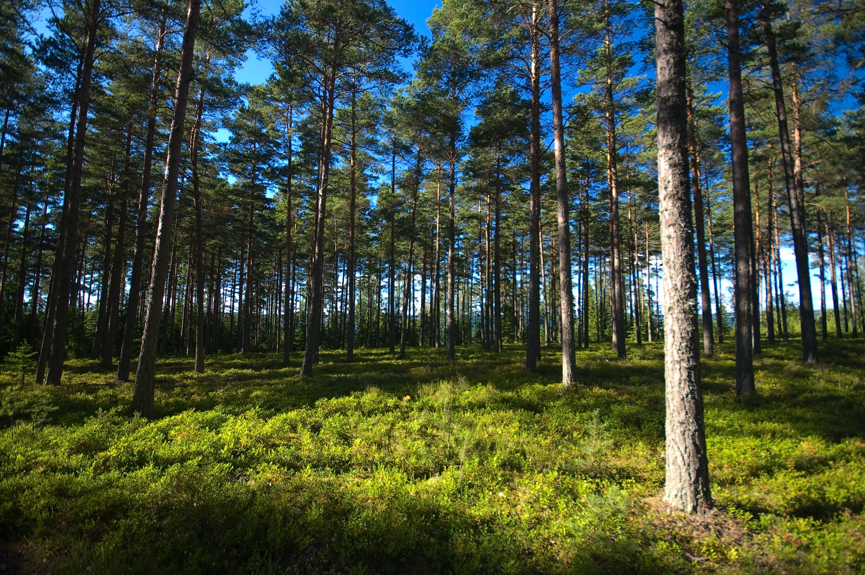 Suomi Metsä