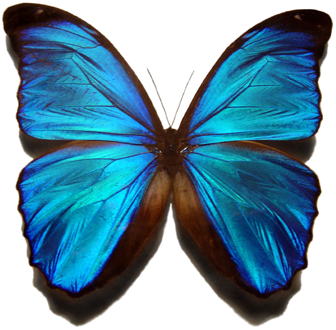 Image Result For Free Printableerfly
