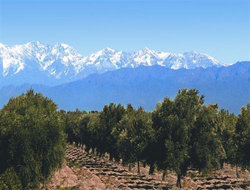 Depiction of Aceite de oliva en Argentina
