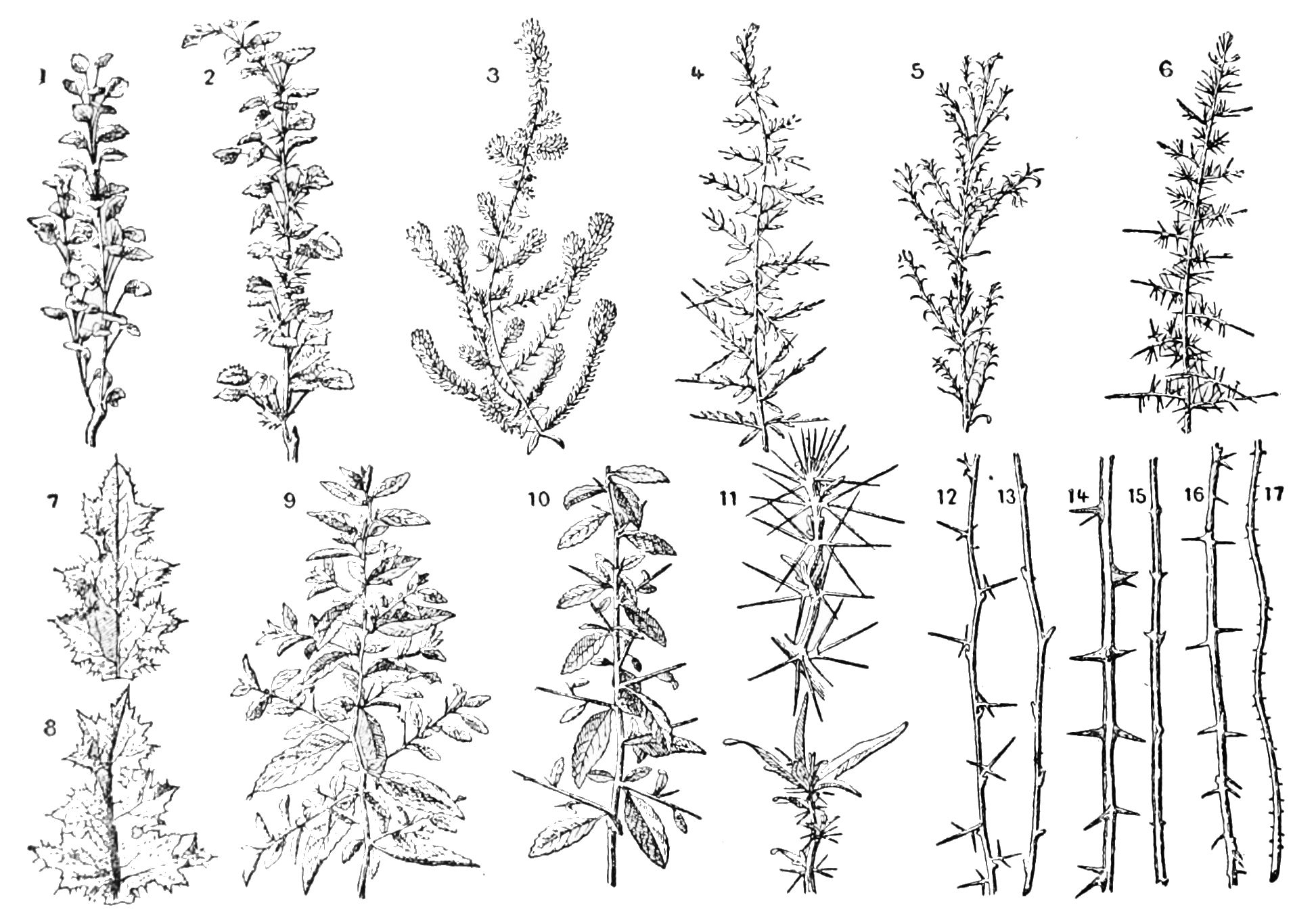 Image result for plant identification