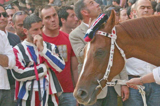 Palio di Siena 2008