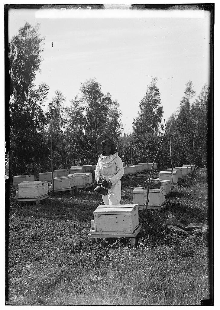 שכונת בורוכוב, משק הפועלות, גידול דבורים
