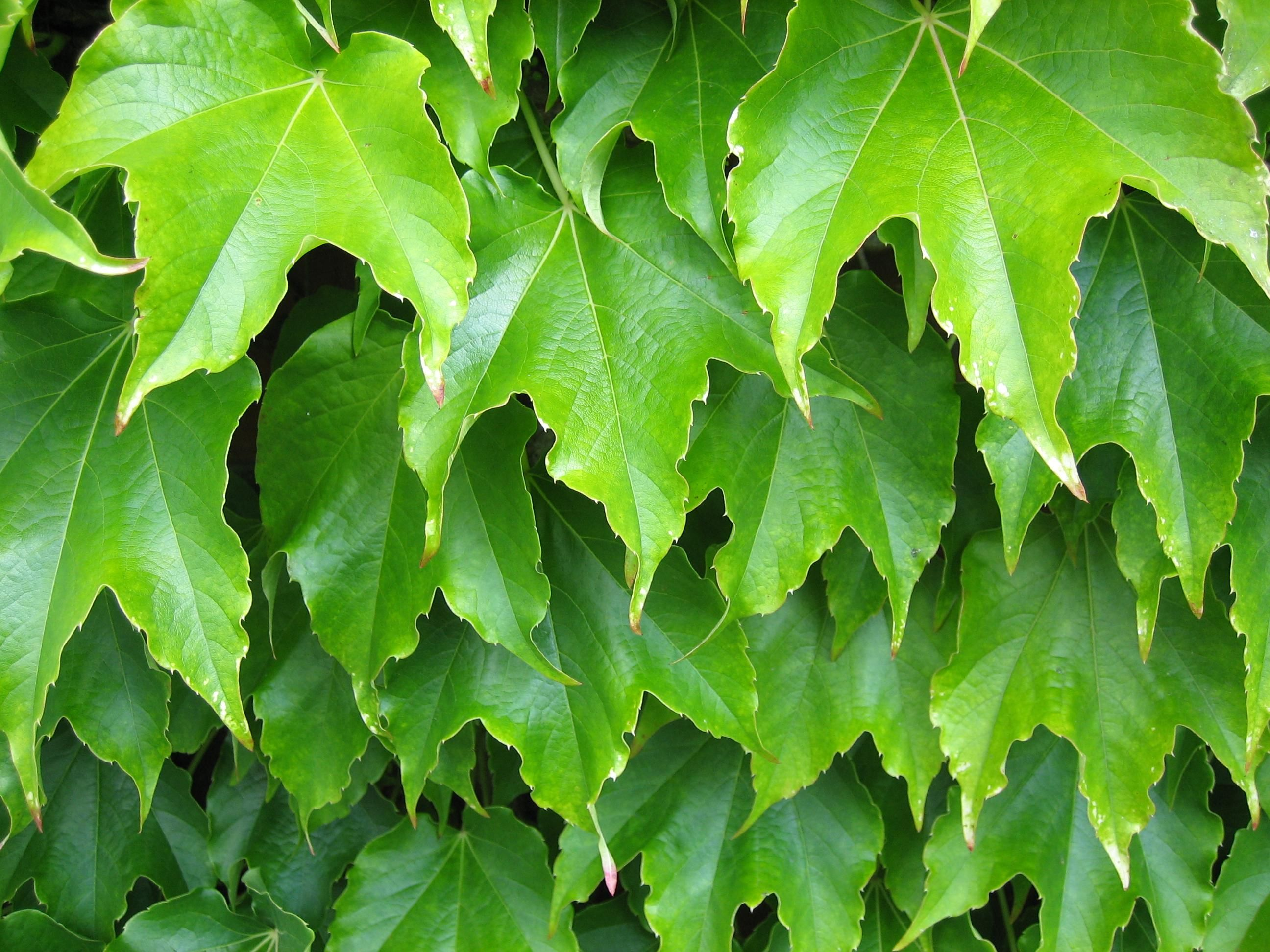Leaves of plants - photo#4