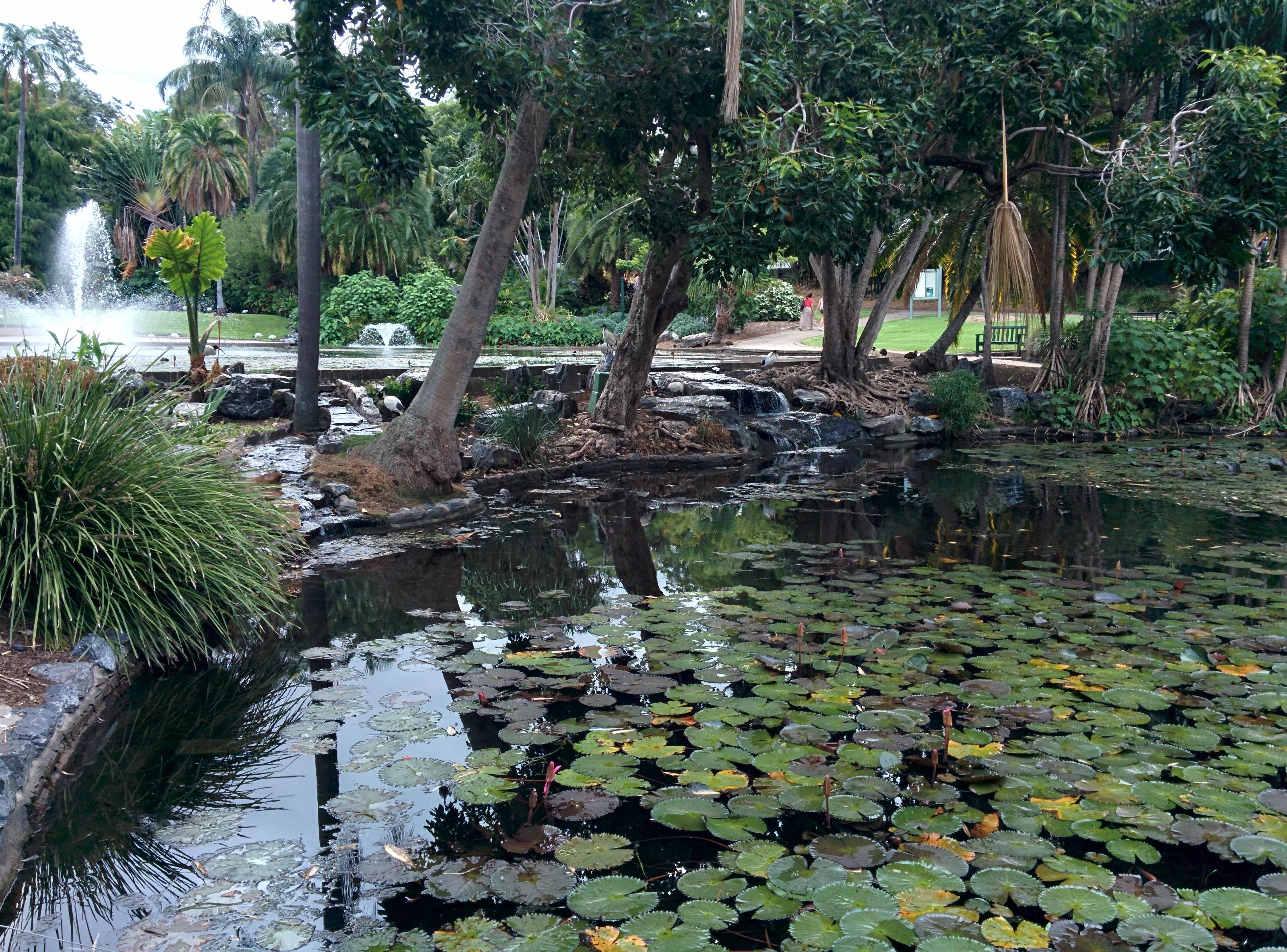 file pond in city botanic gardens brisbane australia jpg