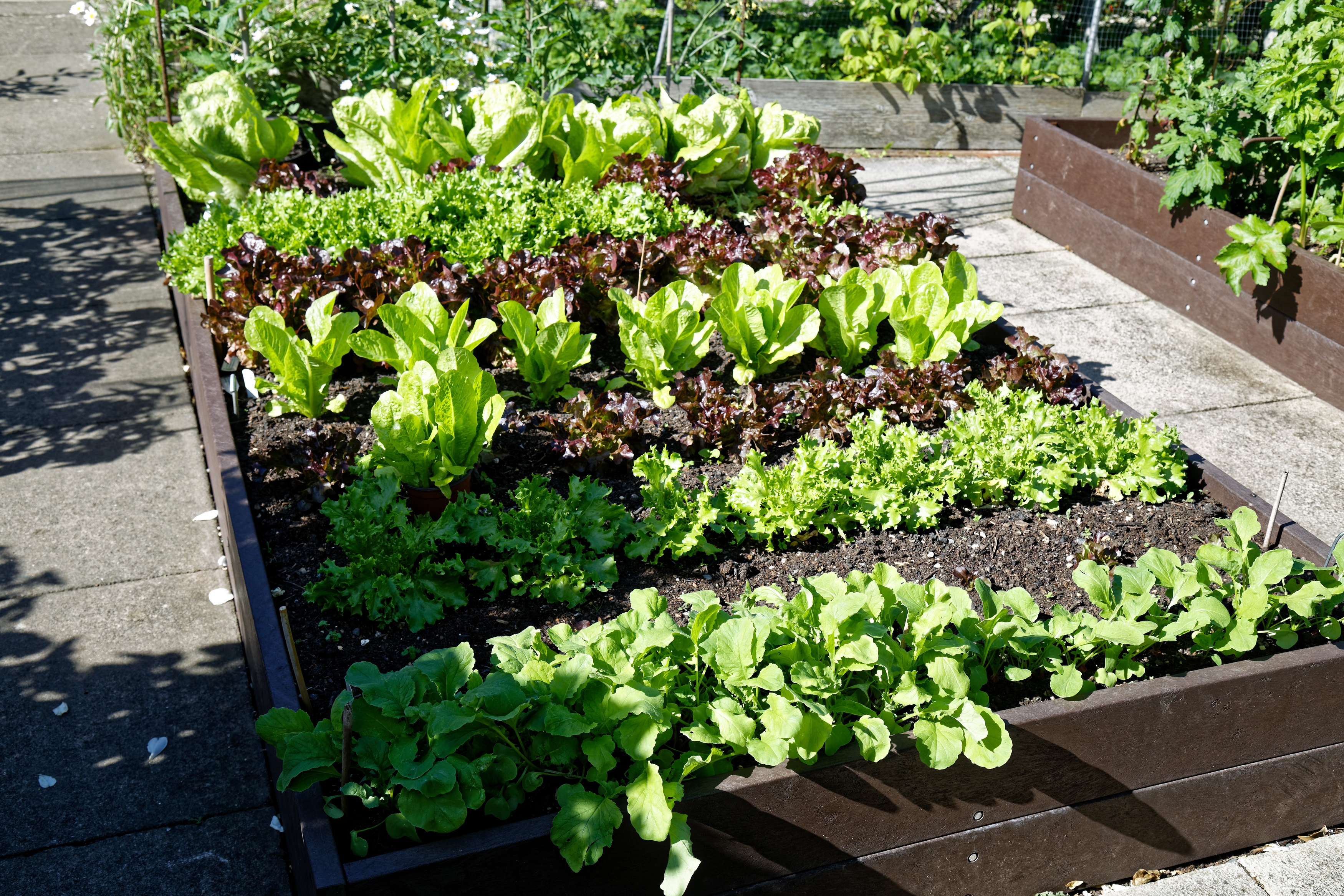Rich soil, adequate water and perfect weather combine for a bumper crop.