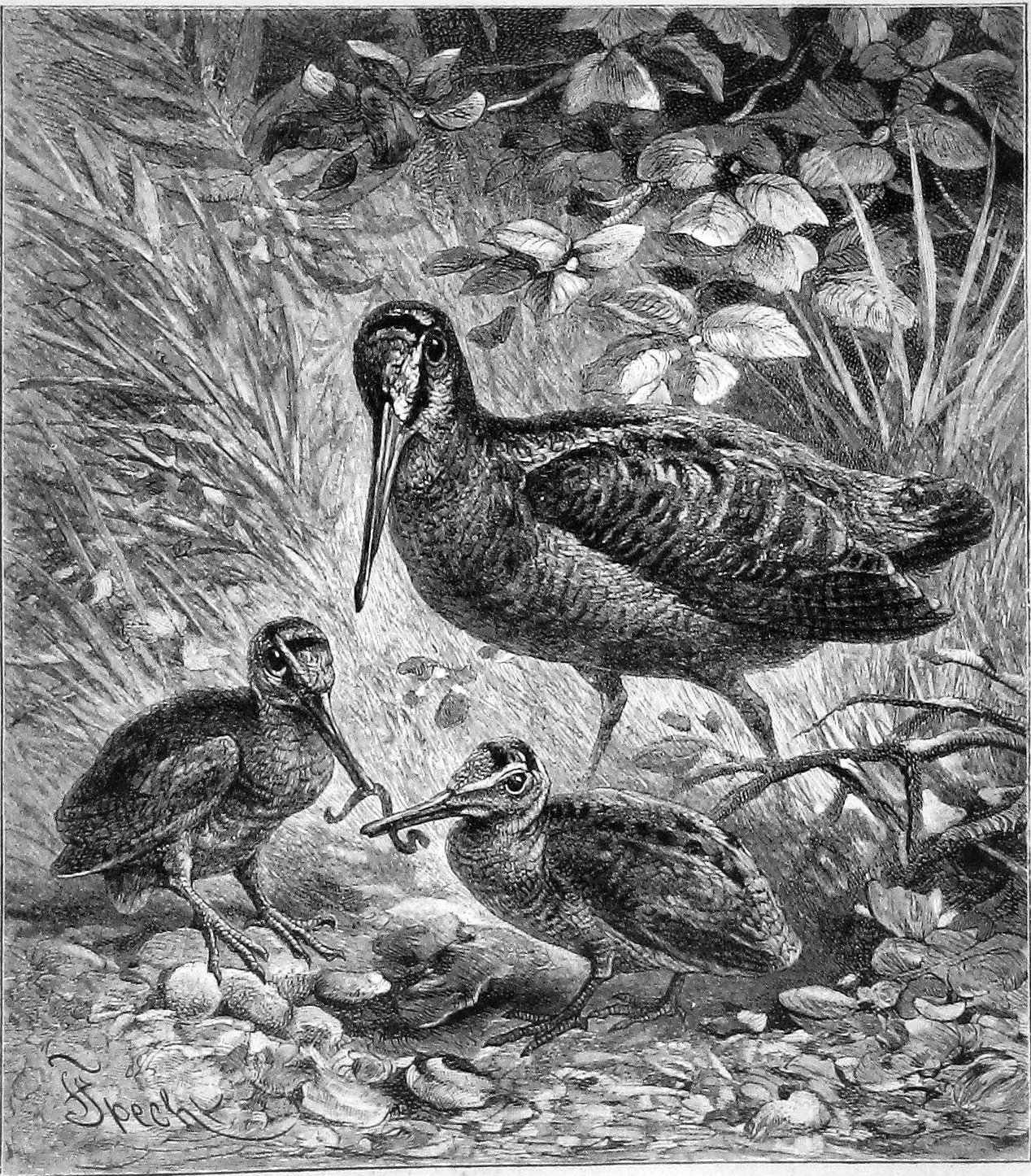 Specht Friedrich The Natural History Of Animals