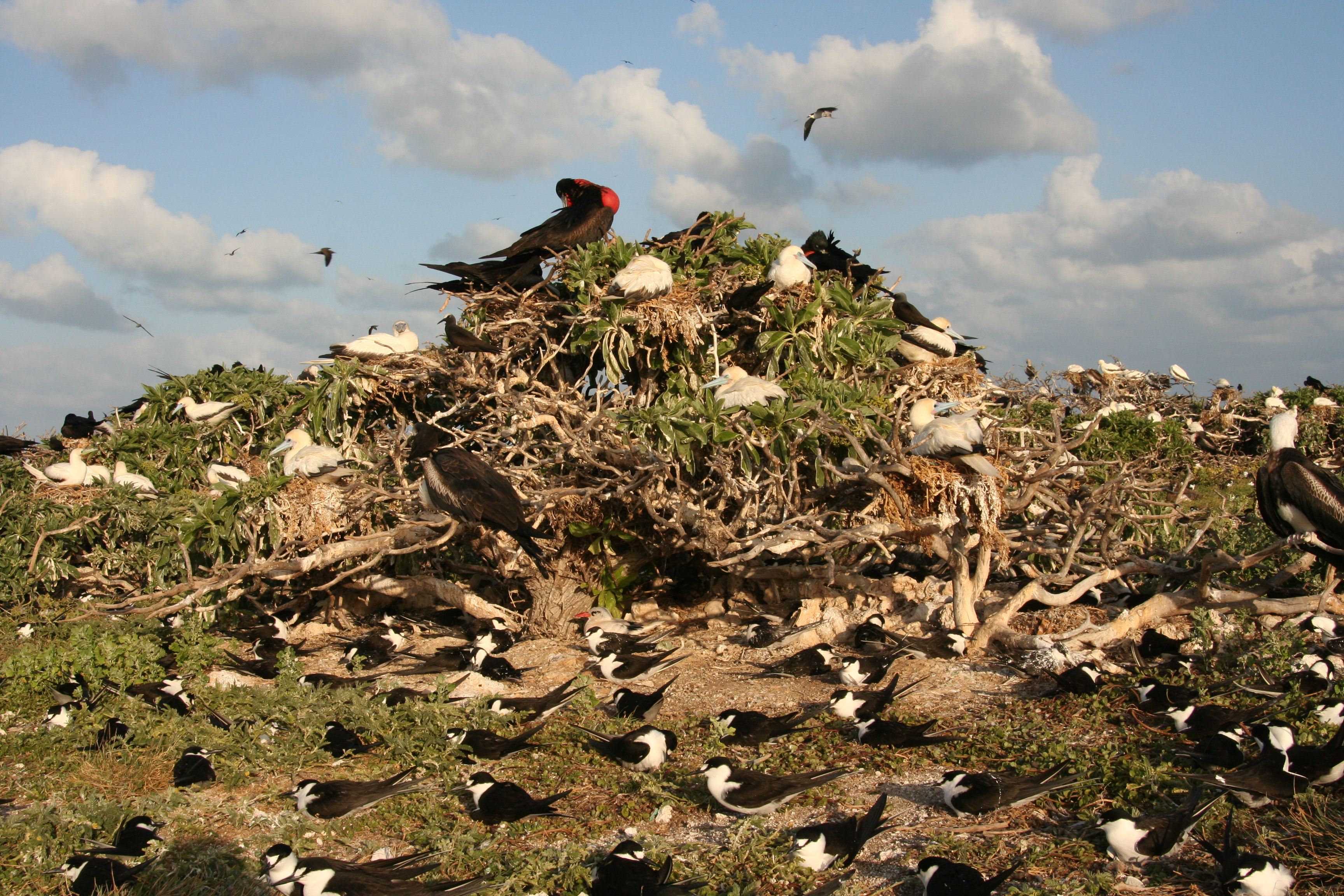 https://upload.wikimedia.org/wikipedia/commons/5/52/Seabird_colony.JPG