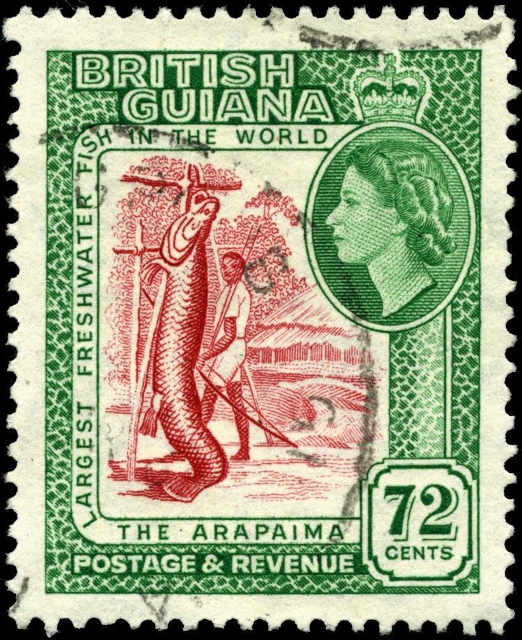 El Paiche en una estampilla en la otrora Guayana Británica.