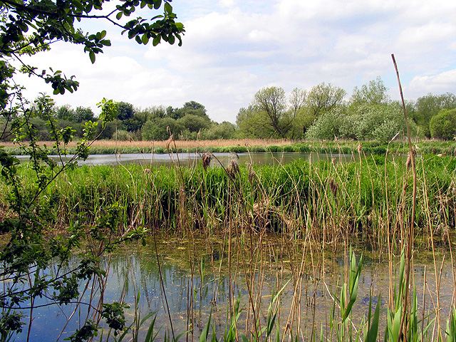 Thatcham Reedbeds Nature Reserve - geograph.org.uk - 9490