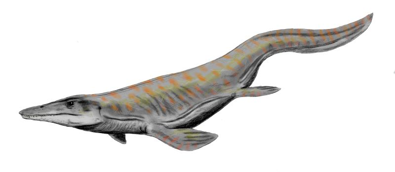 Image Result For Kronosaurus Coloring Page