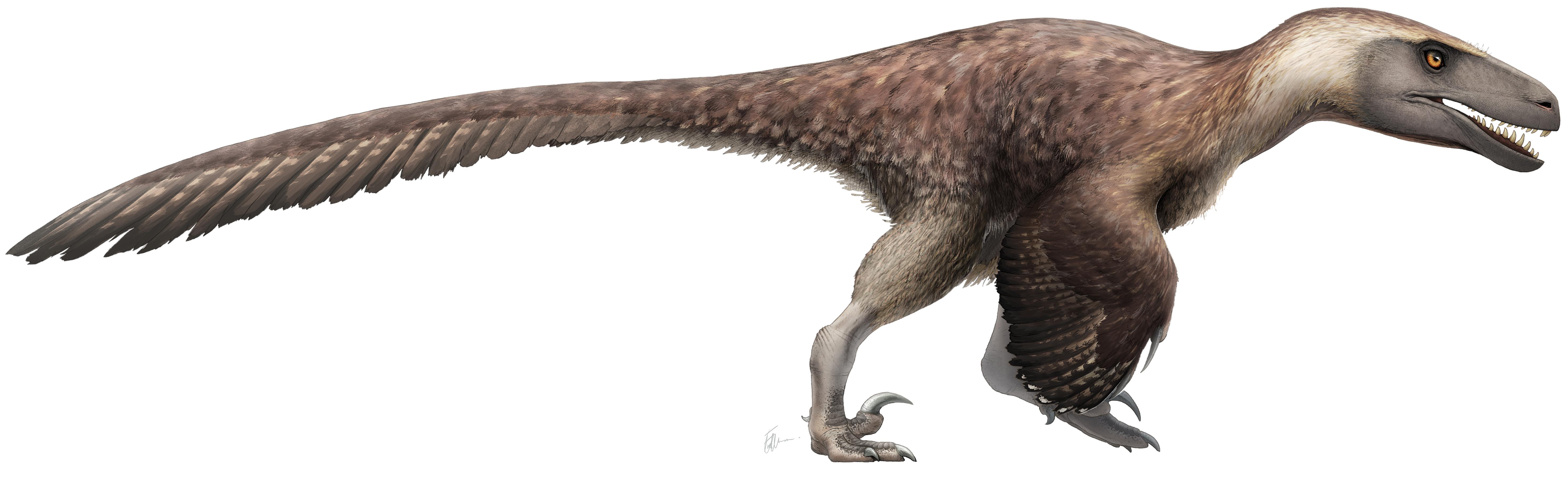 File:Utahraptor Restoration (flipped).png - Wikimedia Commons