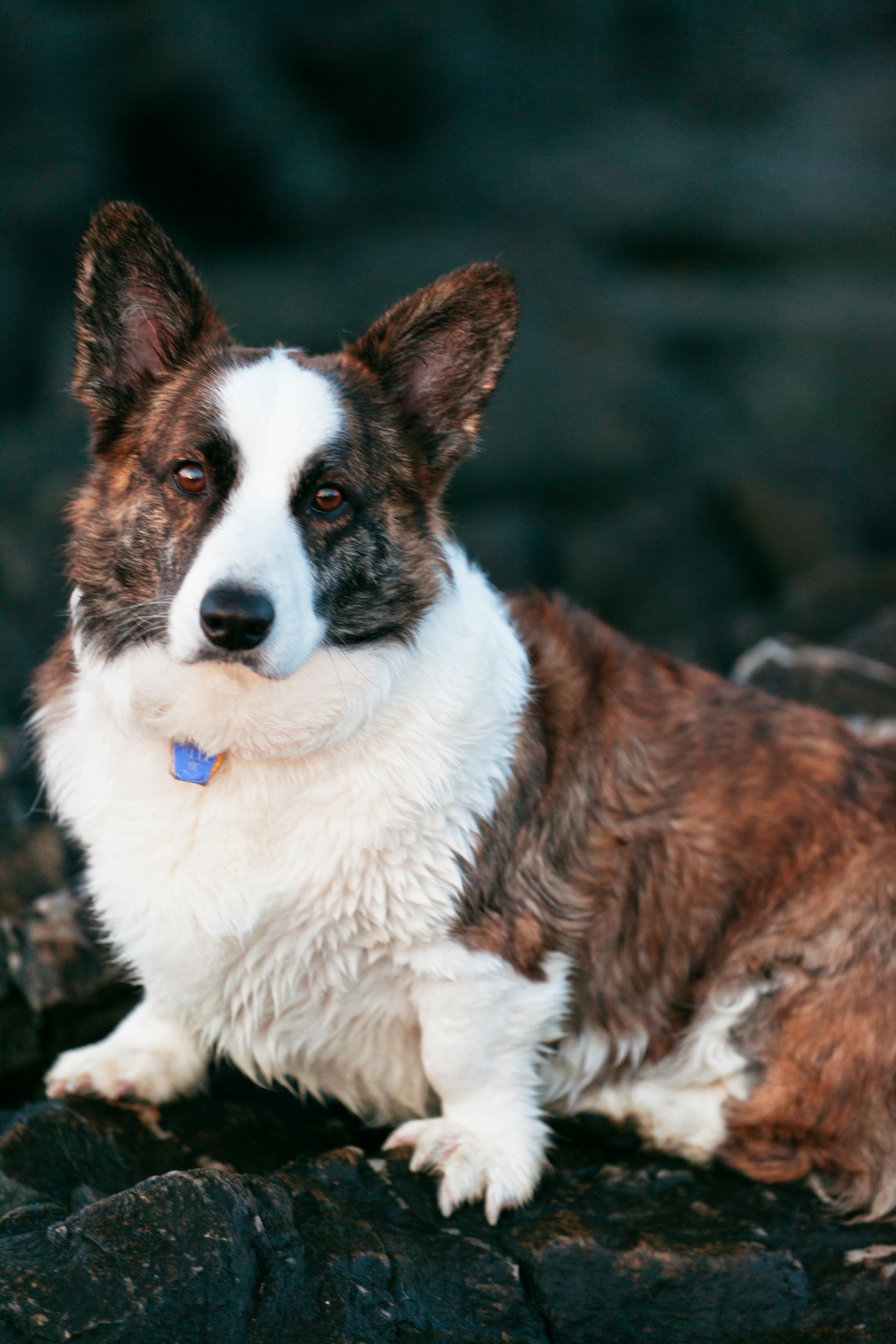 Image Result For Can Any Dog