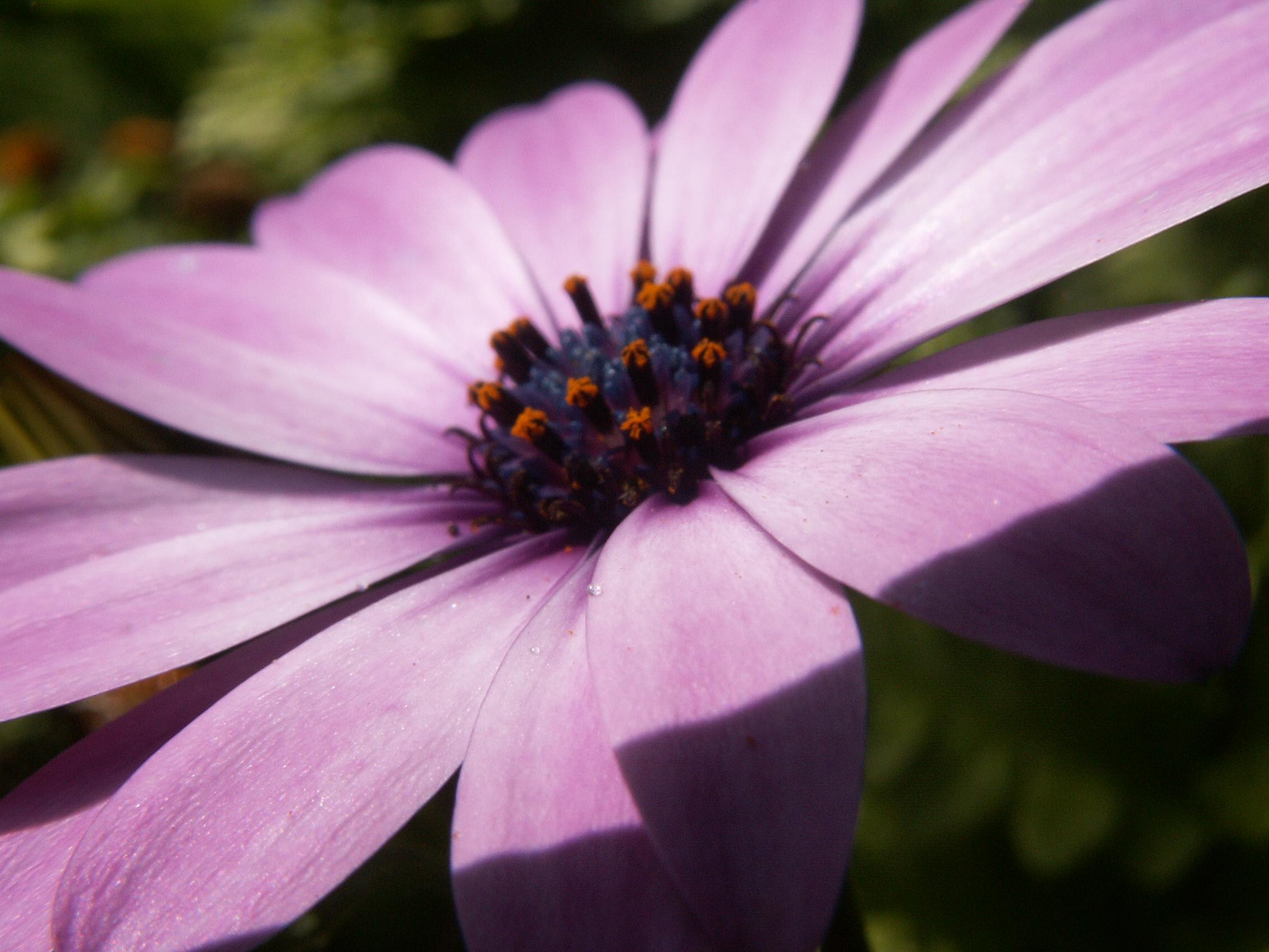 File A Flower Wikimedia mons