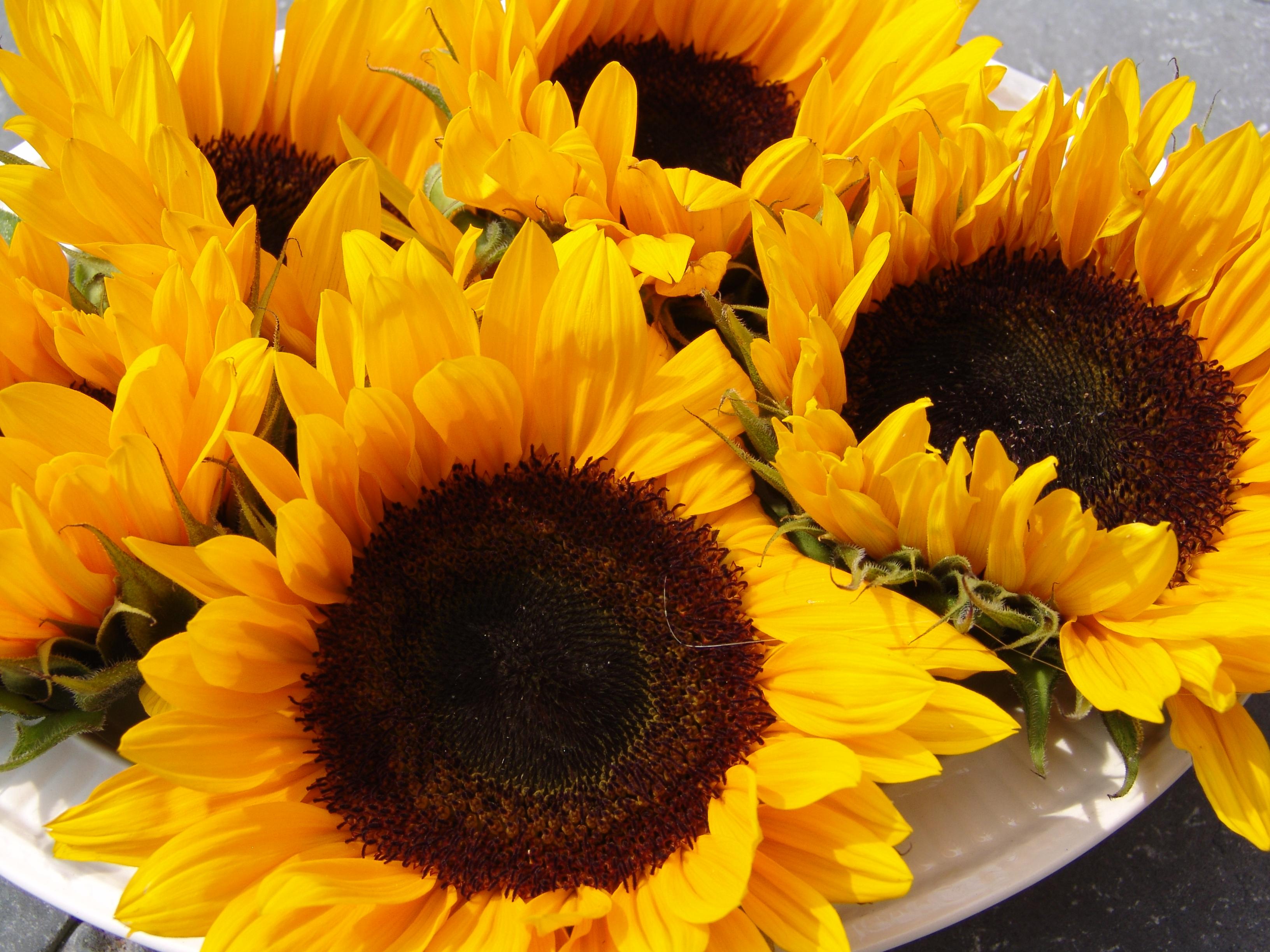 zonnebloemen, bhaktamagazijn
