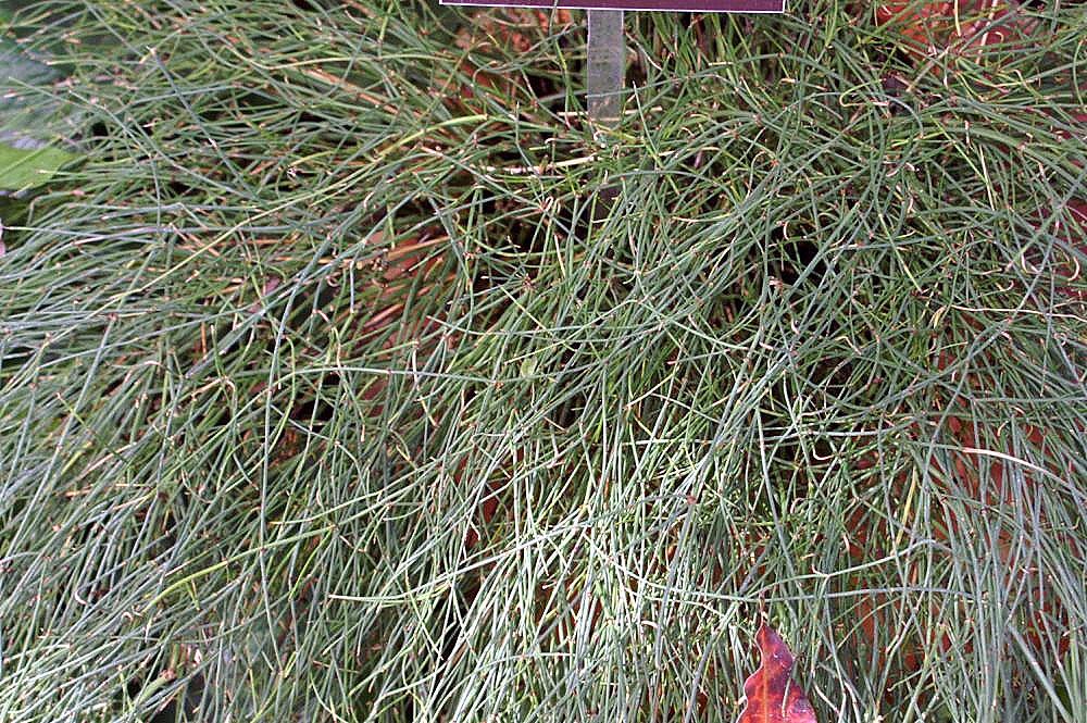 bd541434e A.SH | المملكة النباتية – Plant kingdom
