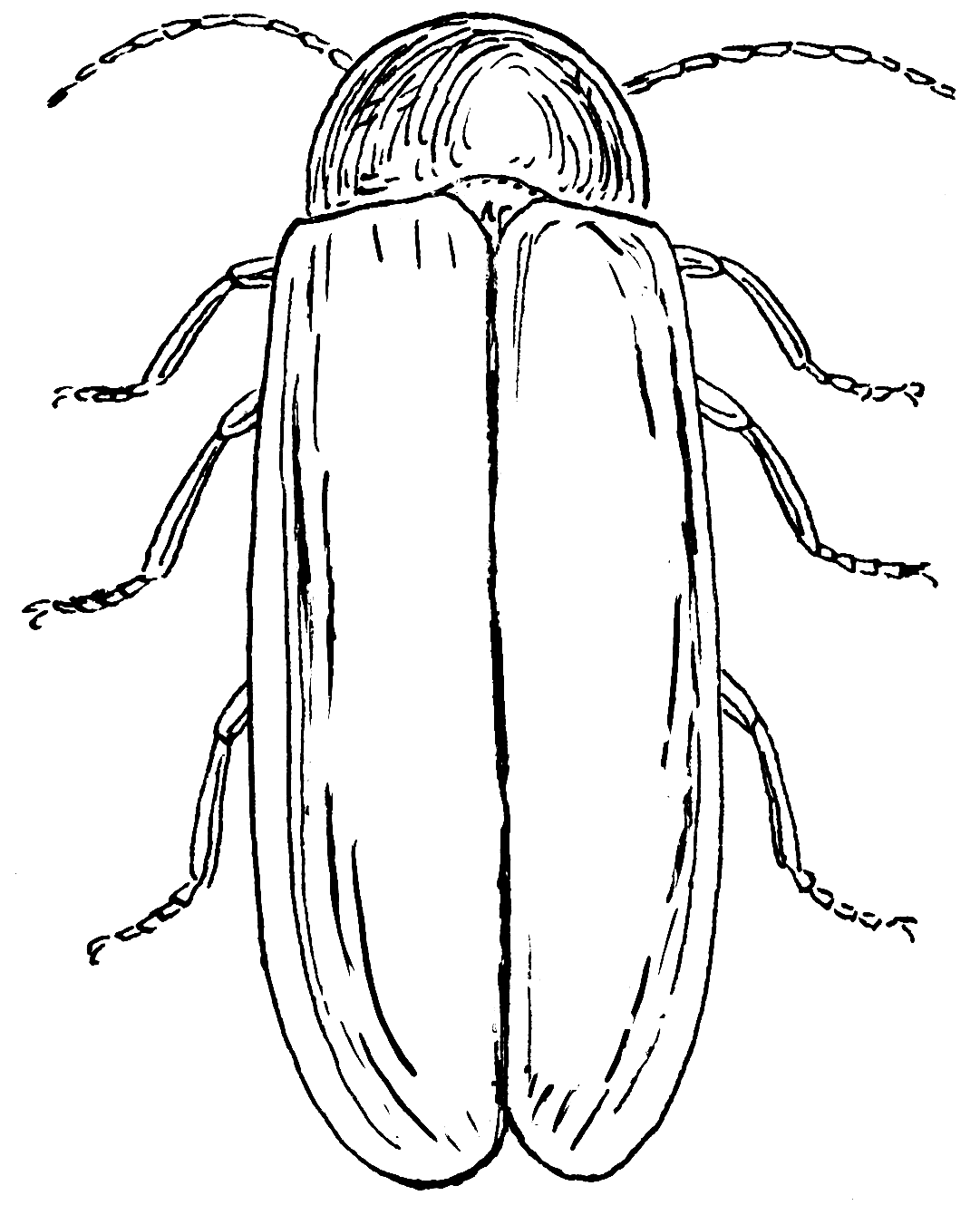 filefirefly (psf)  wikimedia commons