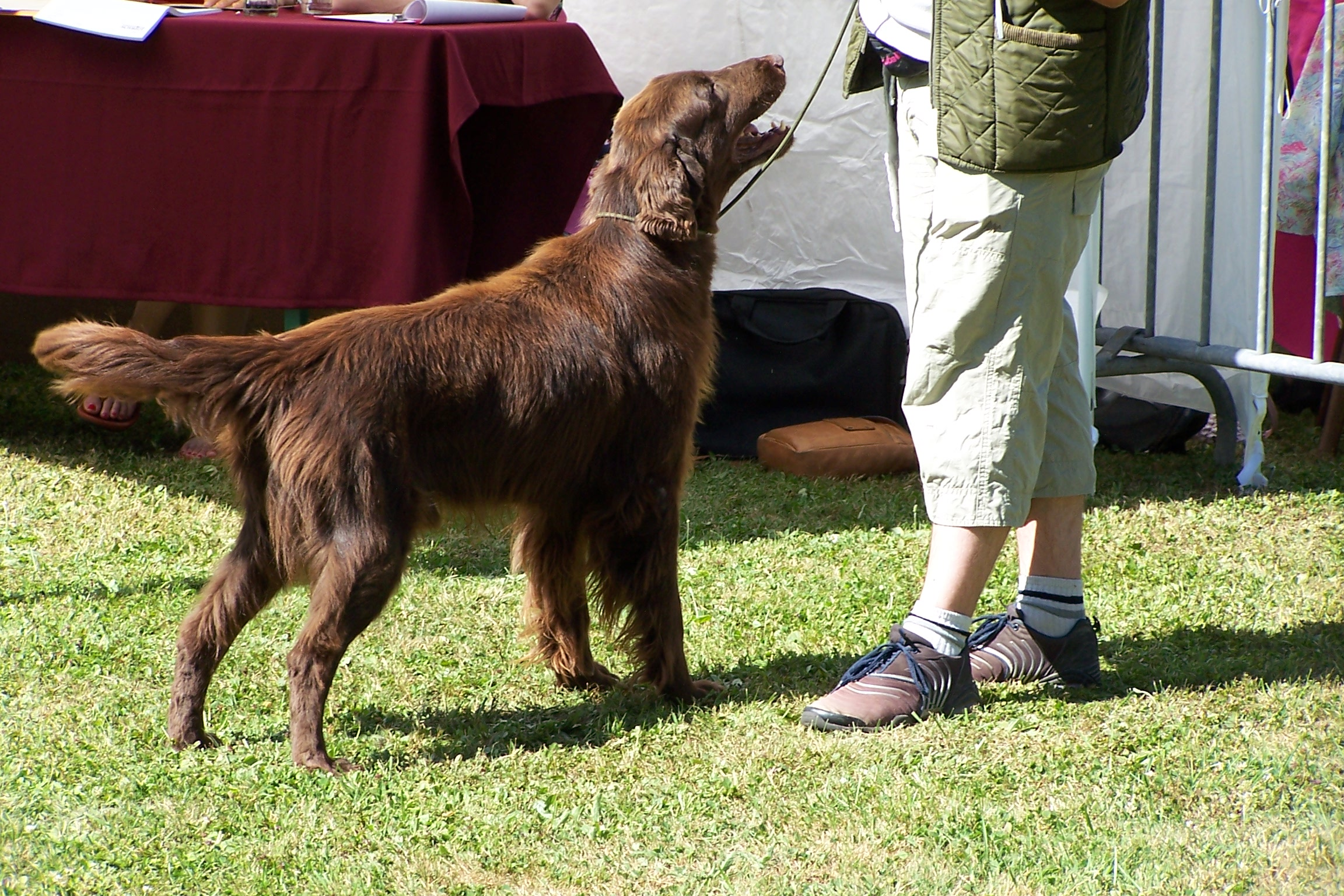 Red Dog Nancy