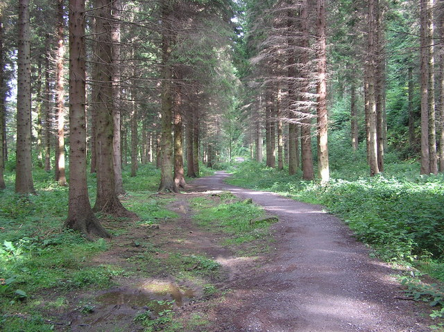 Forest Walk , Hamsterley Forest - geograph.org.uk - 244153