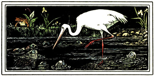 A white crane surrounded by frogs in a dark pond.