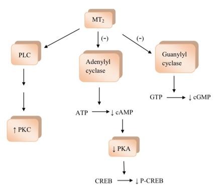 requisitos de zonificación de adenoma de próstata