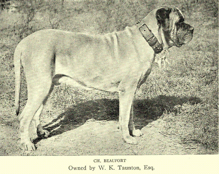Body Weight Height Chart: English Mastiff - Wikipedia,Chart