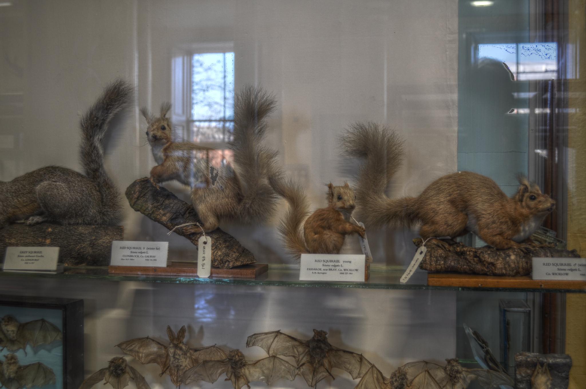 Dublin Ireland Museum Of Natural History