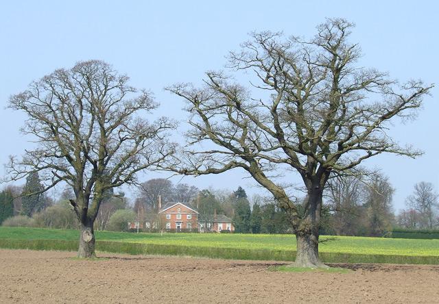 Oak Trees near Wrottesley Hall, Staffordshire - geograph.org.uk - 386634