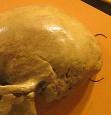 Meandering thoughts on craniology (2/5)