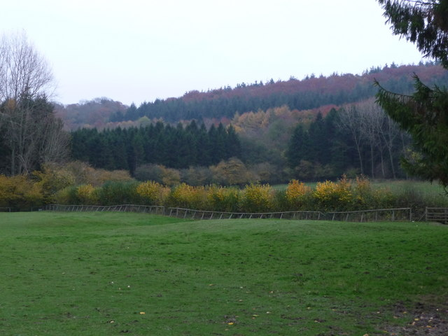 On Wenlock Edge the woods are in colour - geograph.org.uk - 1562255