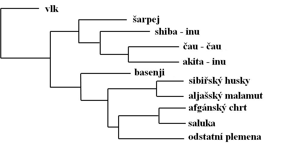 Evolutionary Tree of Dogs File:phylogenetic Tree Dog