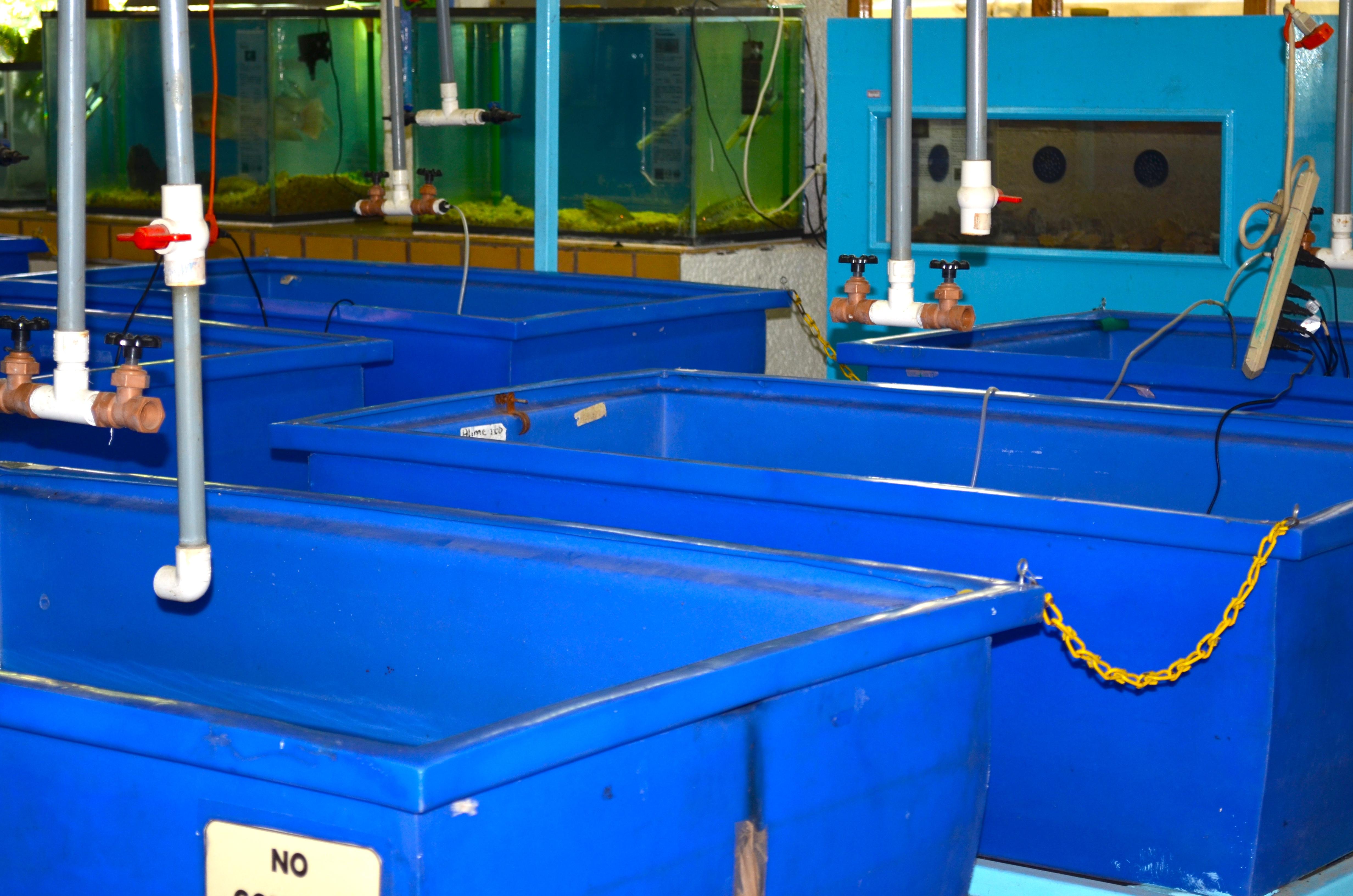File:Plastic fish tubs.JPG - Wikimedia Commons