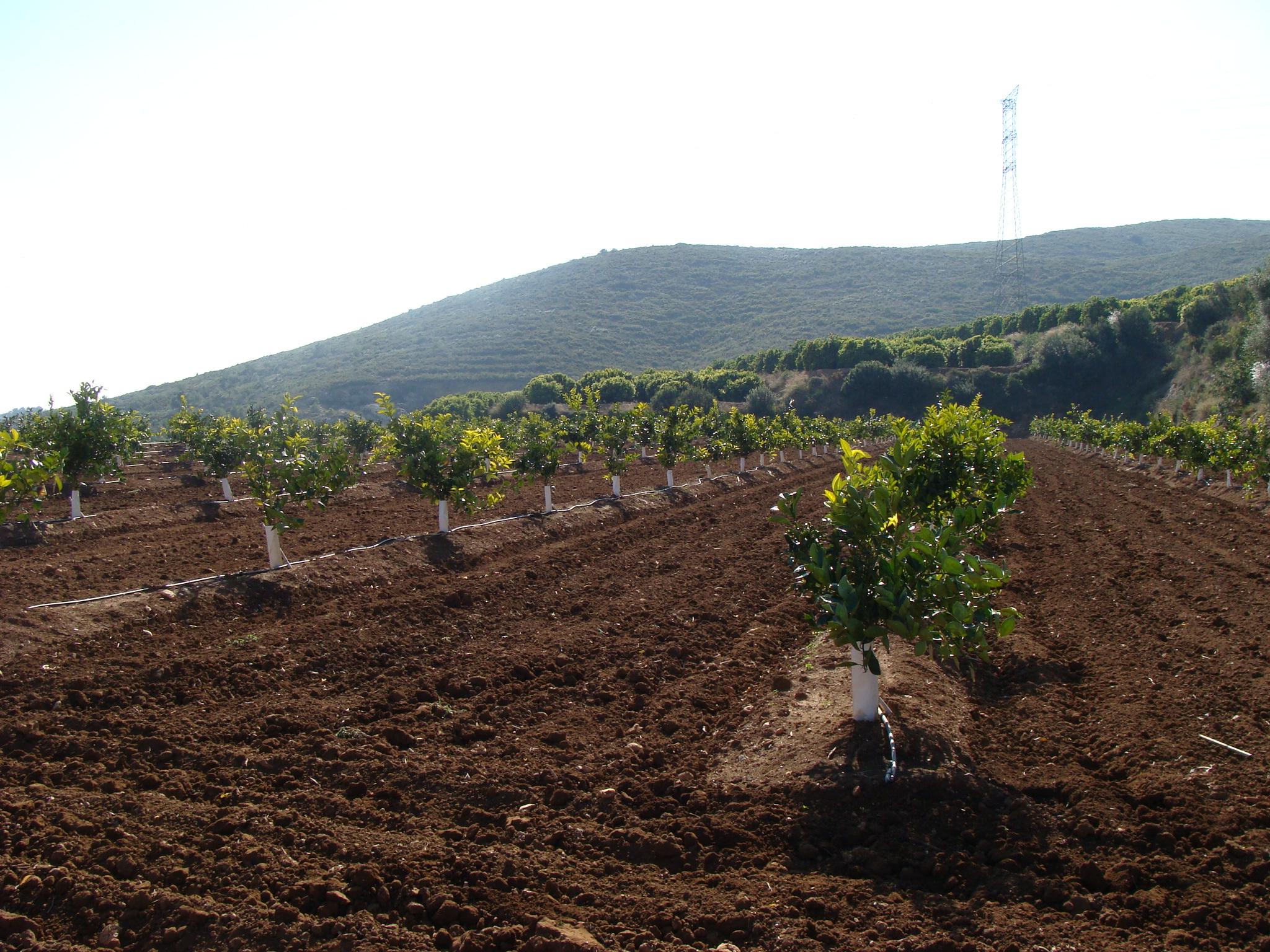 La salinidad del suelo en agricultura for Riego por goteo pistachos