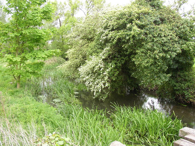 River Hiz, Ickleford - geograph.org.uk - 89058