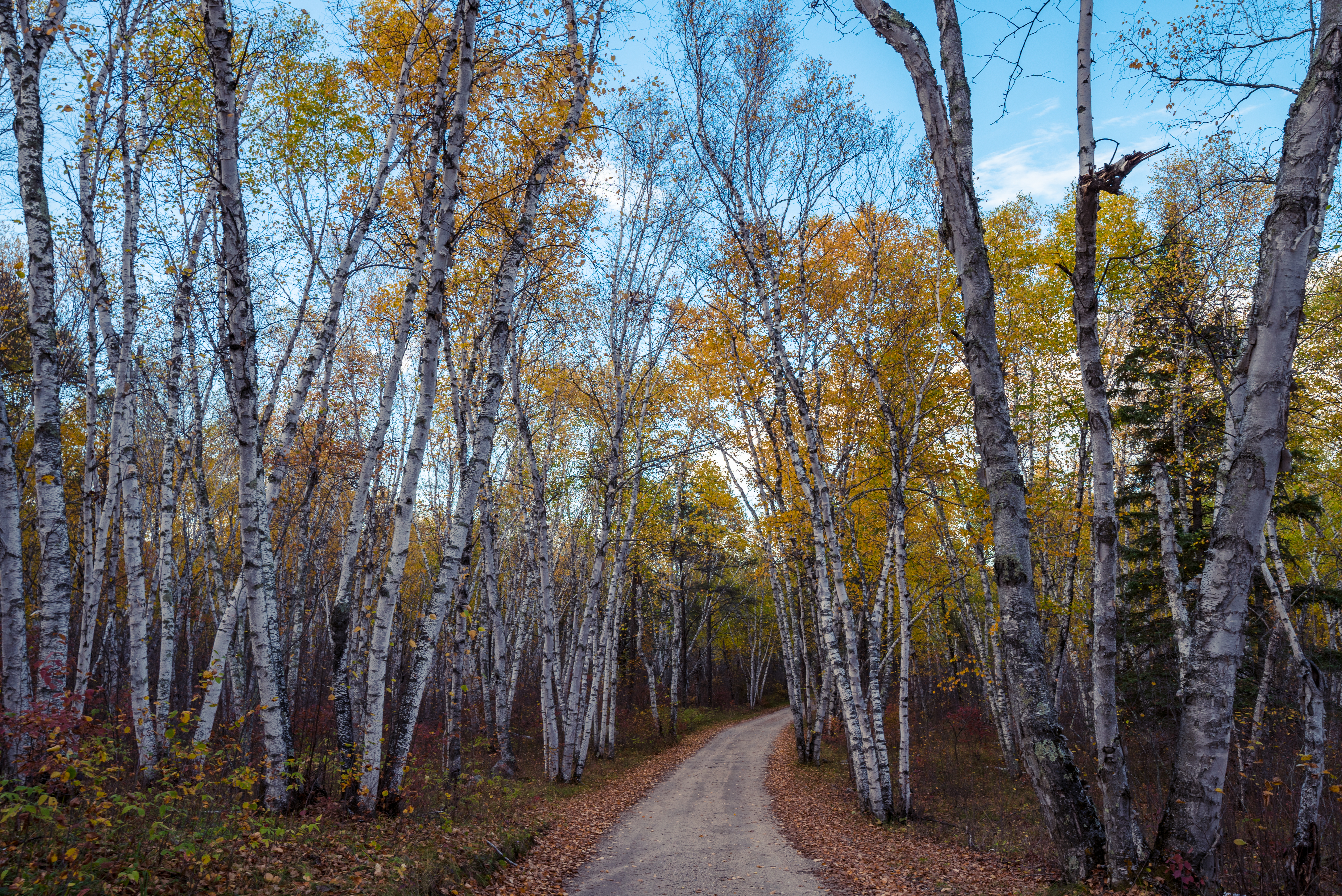 File:Road to Lake of the Woods - Zippel Bay State Park