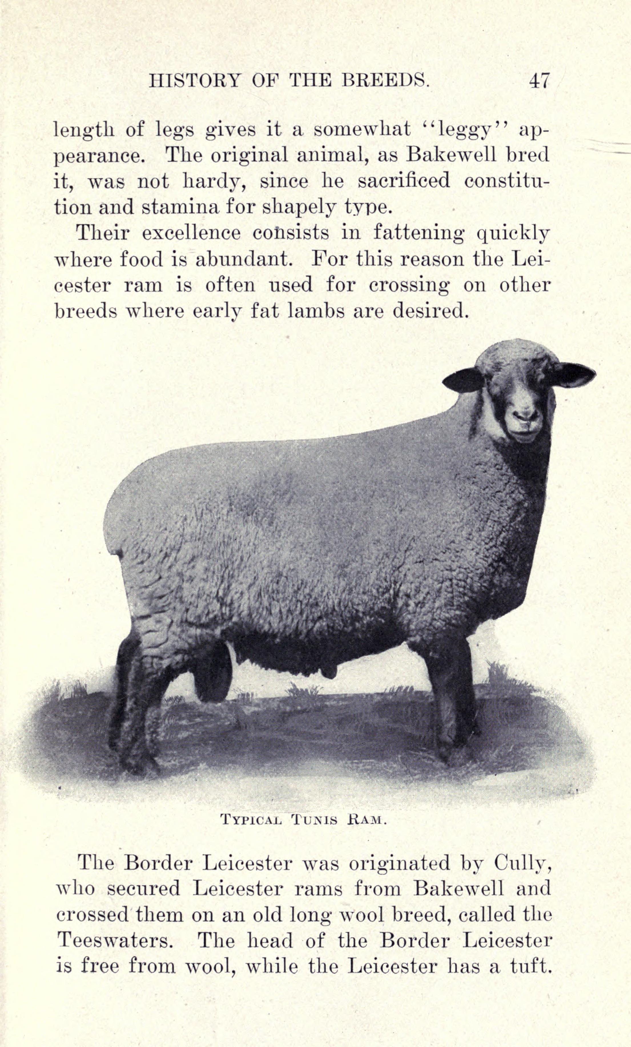 File:Sheep diseases (Page 47) BHL17869897 jpg - Wikimedia