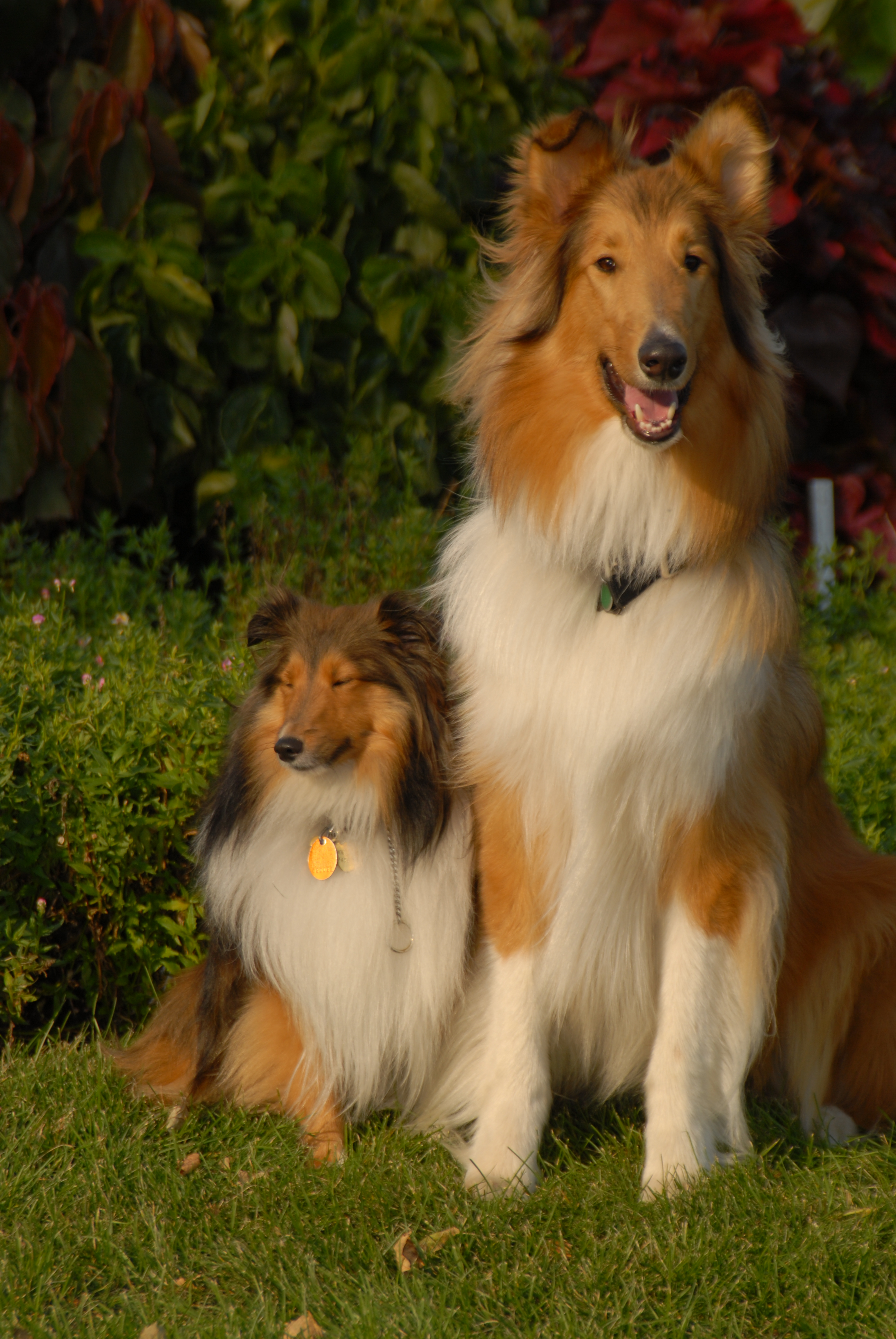 A Rough Guide To Types Of Scientific Evidence: Shepherd Class' Dog Breed