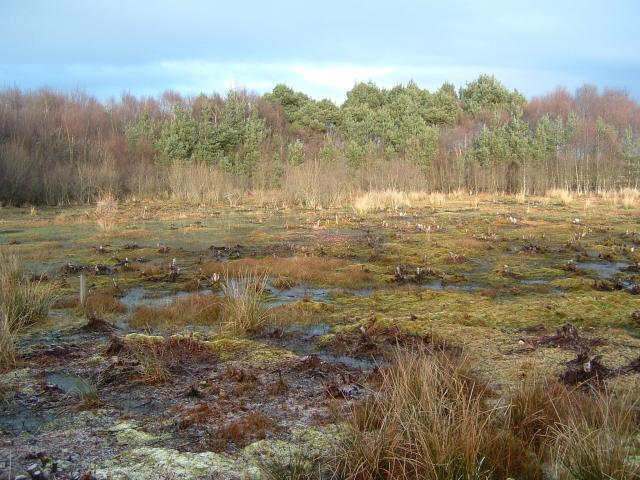 Skipwith Common - geograph.org.uk - 58