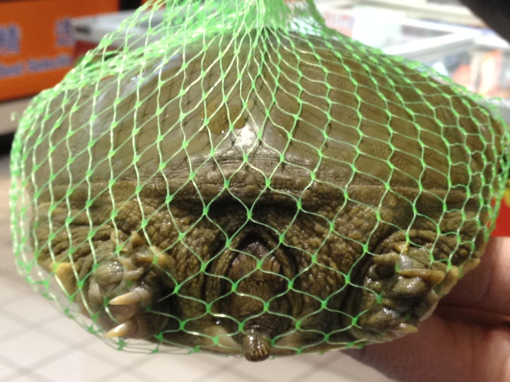 Schildkröte in einem chinesischen Supermarkt