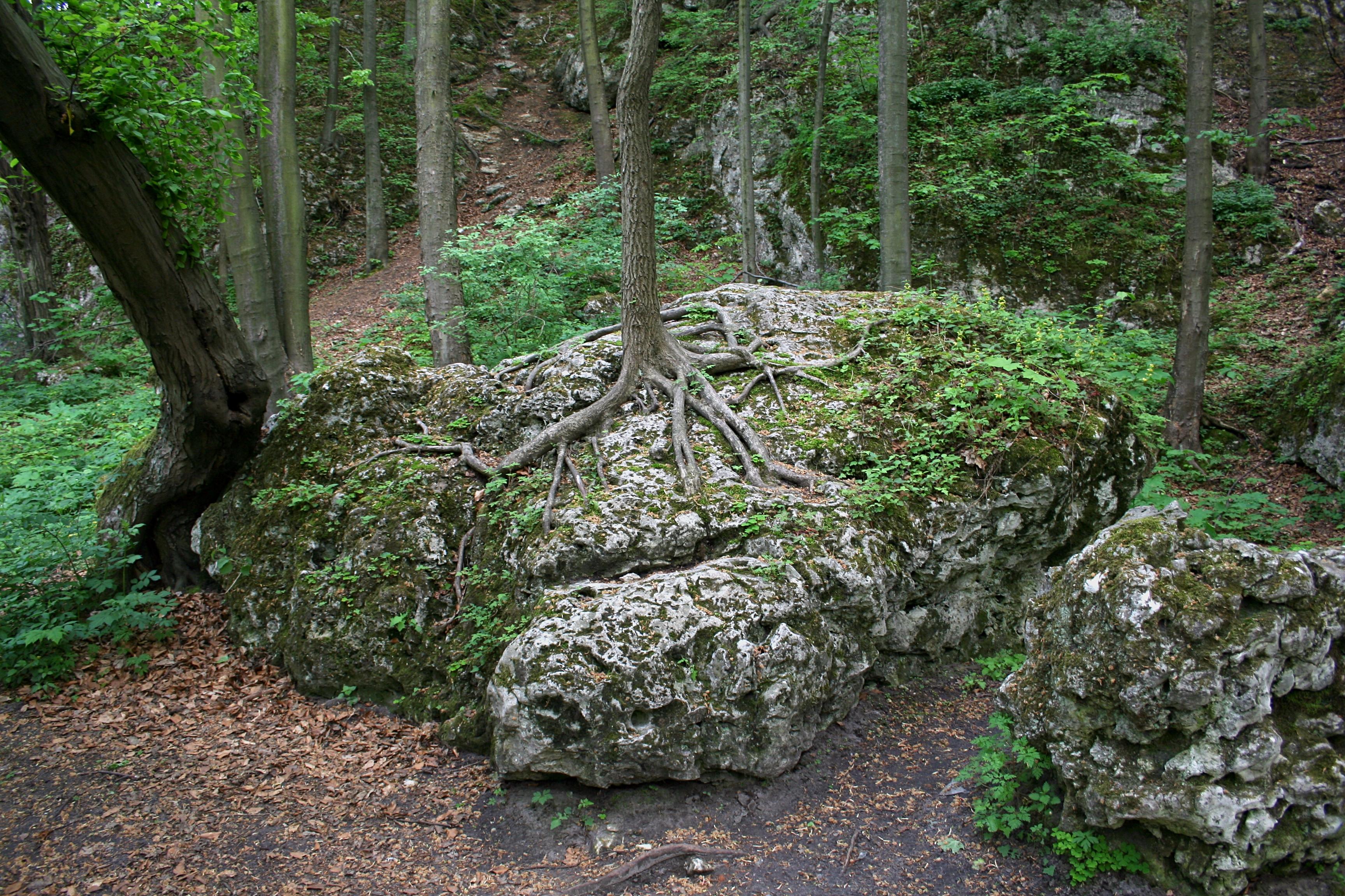 """Rezerwat przyrody """"Parkowe"""""""