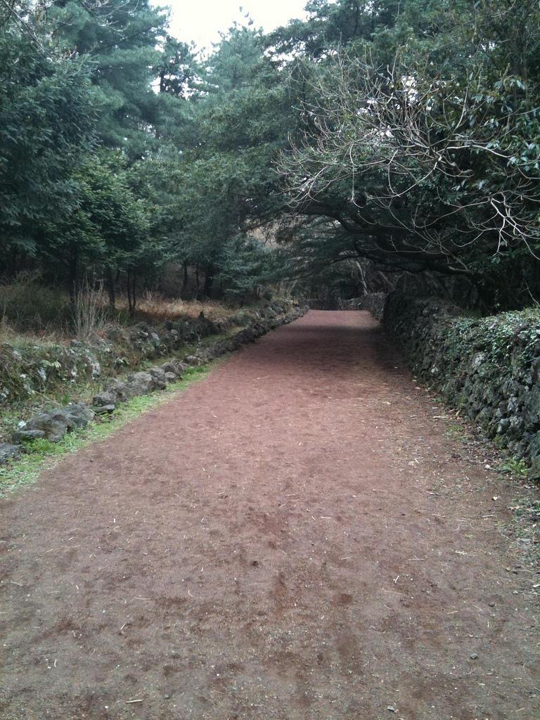 Image result for bijarim forest