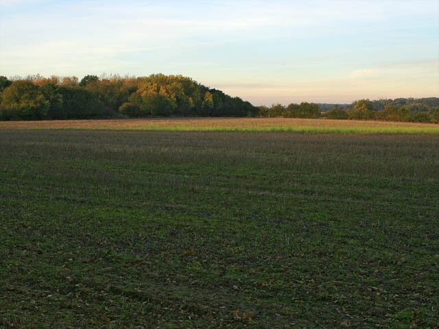 A walk through Twyford Wood, No 3a - geograph.org.uk - 272041
