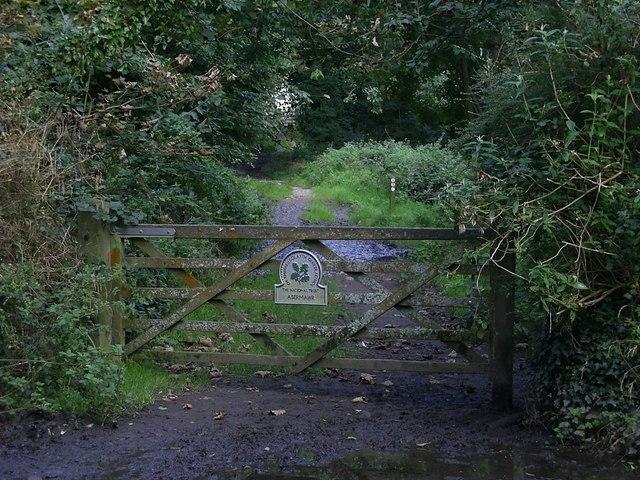 Abermawr Woods - geograph.org.uk - 984348
