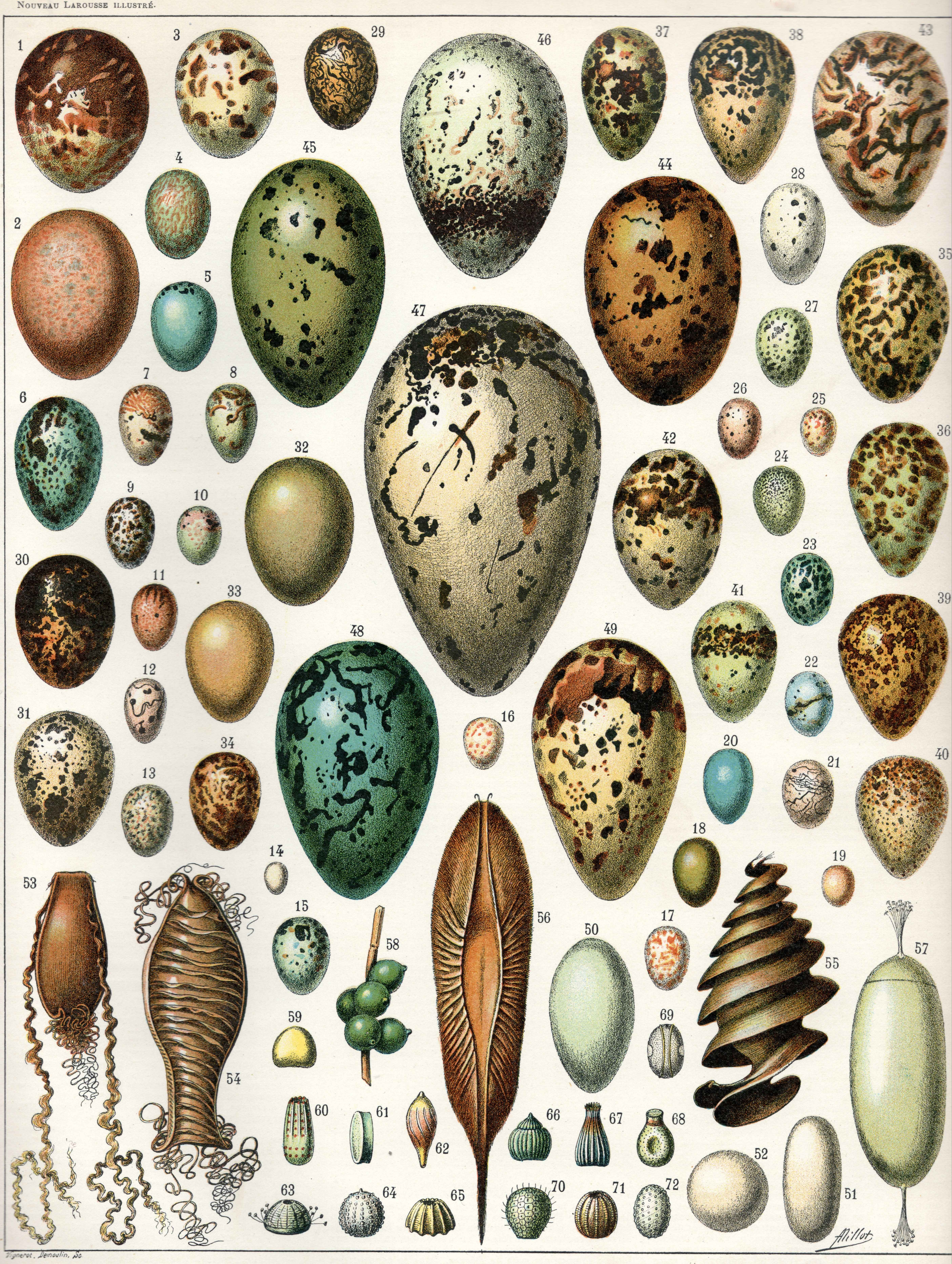 Egg Wikipedia Gallery Images And Information Snake Skeleton Diagram