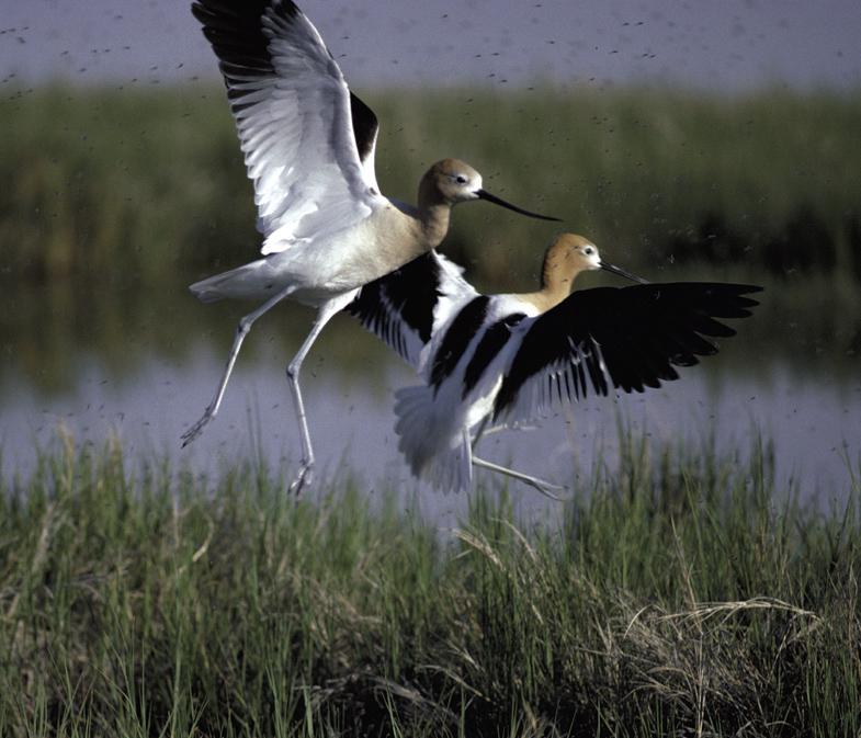 Kluten vogels wikipedia for An und verkauf gebrauchtmobel
